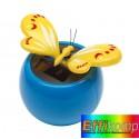 Motyl solarny, BRIMSTONE, niebieski/żółty.